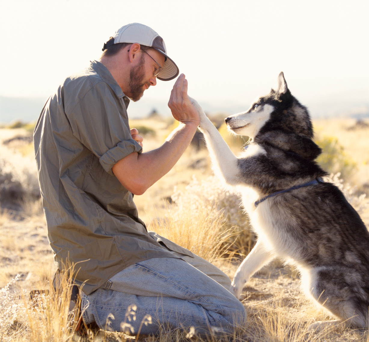 Man pet owner teaching training his Siberian husky dog. People with animals best friends, love, friendship, connection concept.