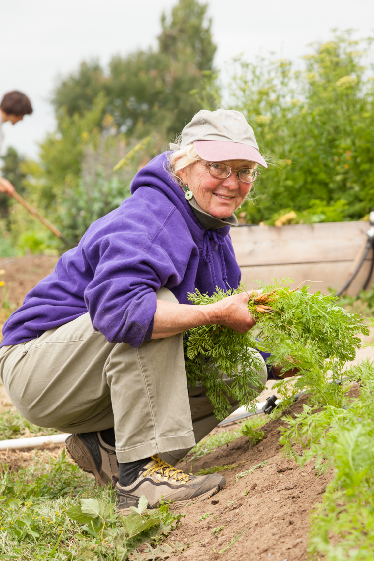 Happy, smiling, healthy, senior woman volunteer working in community garden. Active mature lifestyles.